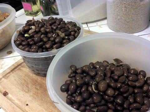 loquat seeds